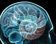 Transcending your Reptilian Brain