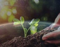 Reversing Global Warming, a Free Online Course by Pachamama Alliance